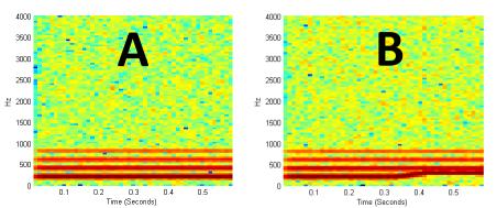 Fish Ears Spectrograms
